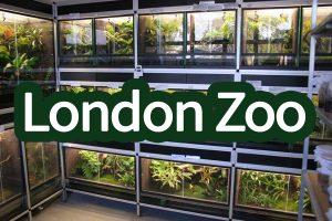 Londonzoogallerij