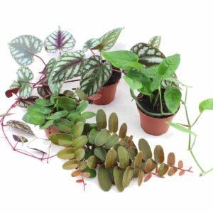 Kletter- und Hängepflanzen