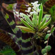 orchideenterrarium1