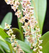 orchideenterrarium2