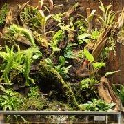 rana-terrarienbau-orchideenterrarium