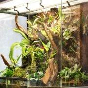rana-terrarienbau-orchideenterrarium-detail