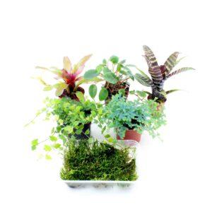 terrarienpflanzen-set-klein-1