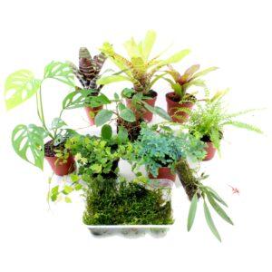 terrarienpflanzen-set-mittel