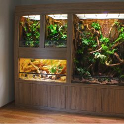 terrarienwand für geckos