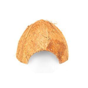 Halbe Kokosnuss als Laichhaus für Pfeilgiftfrösche